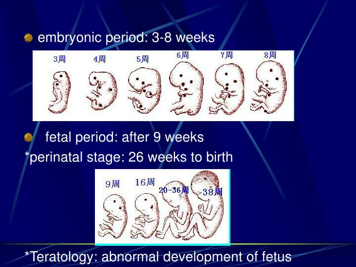 embryonic period: 3-8 weeks