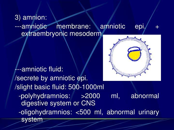 3) amnion: