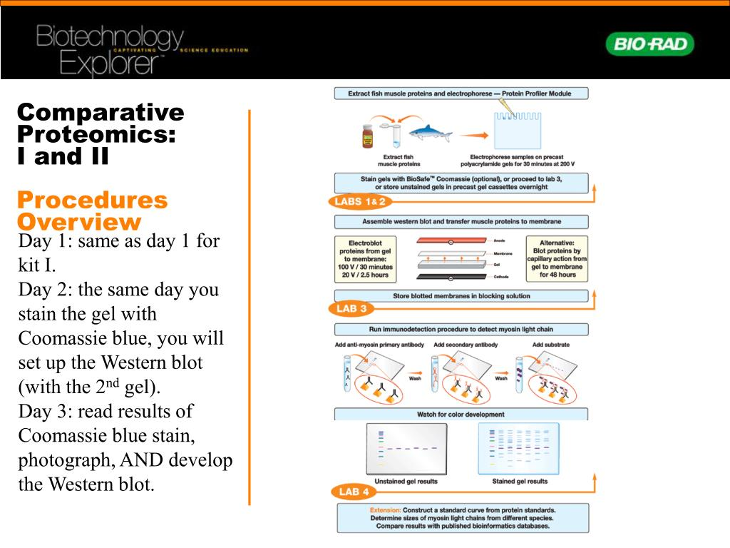 comparative proteomics Comparative proteomics comparative transcriptomics  together with the advancements in genomics and proteomics the root cause of a.