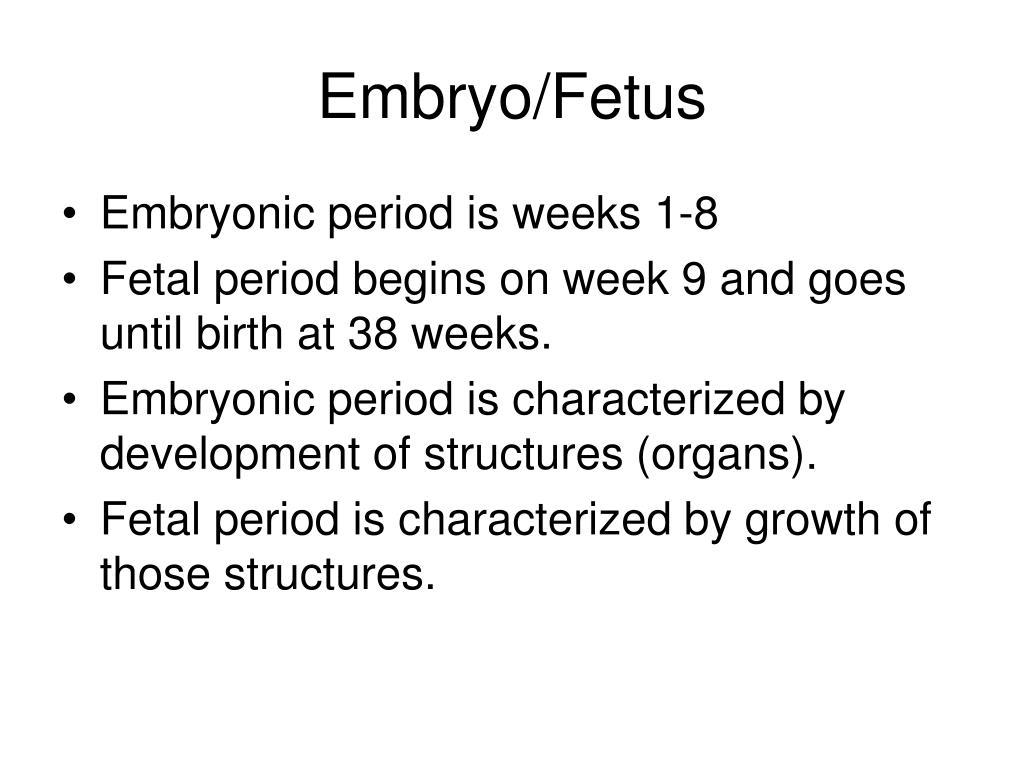 Embryo/Fetus