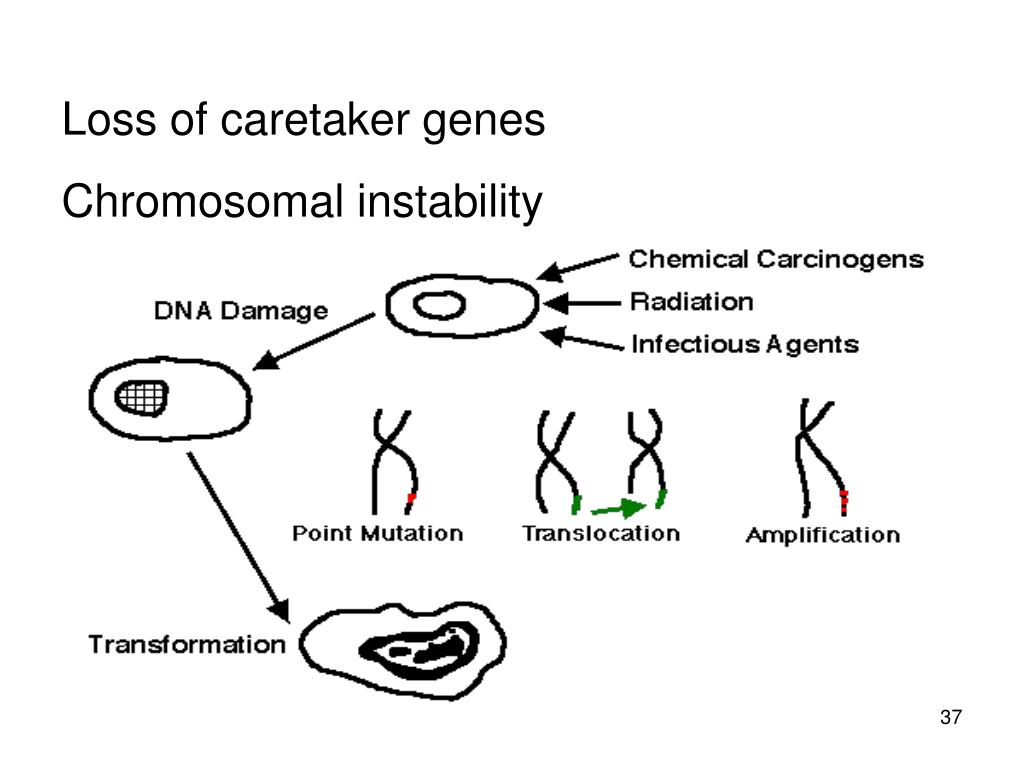 Loss of caretaker genes