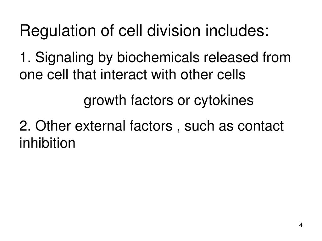 Regulation of cell division includes: