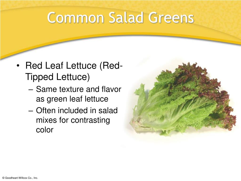 Red Leaf Lettuce (Red-Tipped Lettuce)