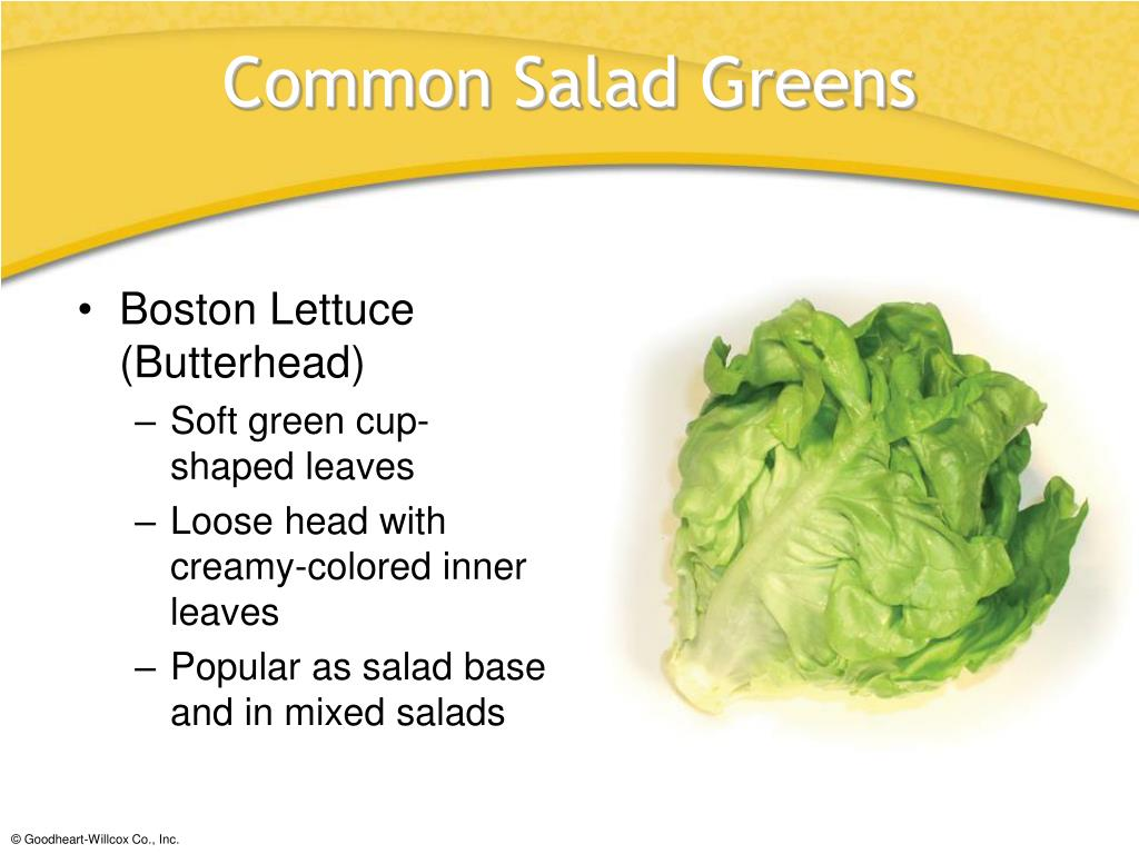 Boston Lettuce (Butterhead)