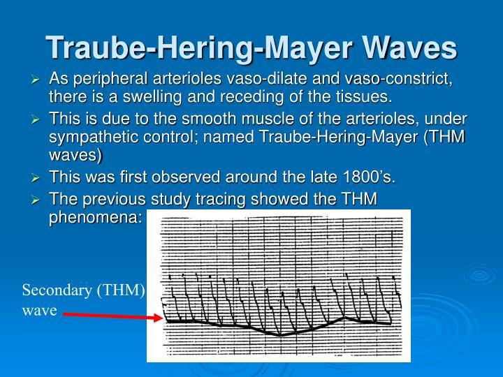Traube-Hering-Mayer Waves