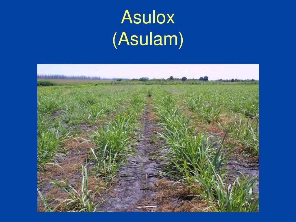 Asulox