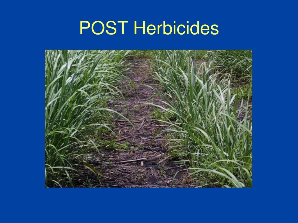 POST Herbicides