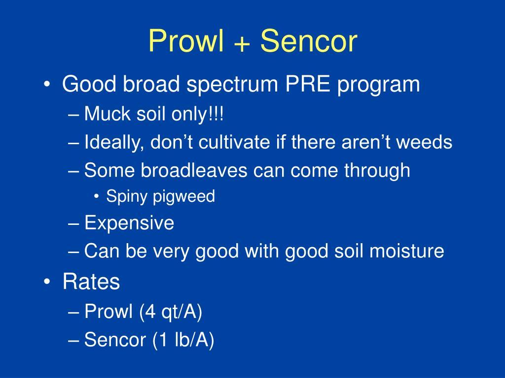 Prowl + Sencor