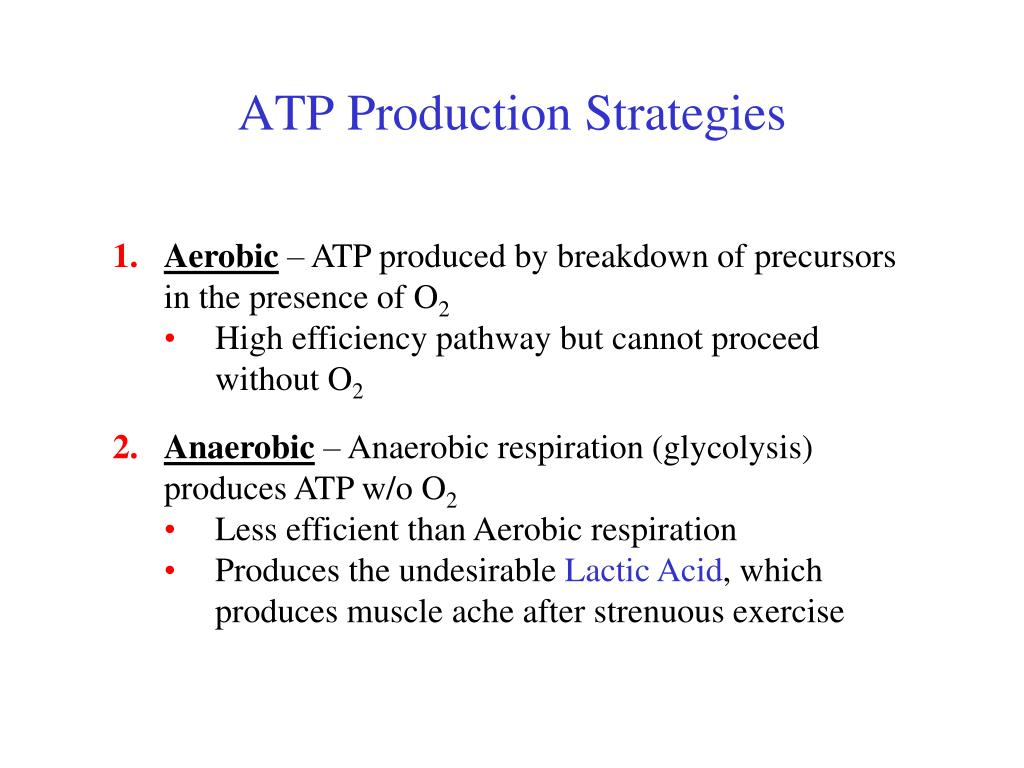 ATP Production Strategies