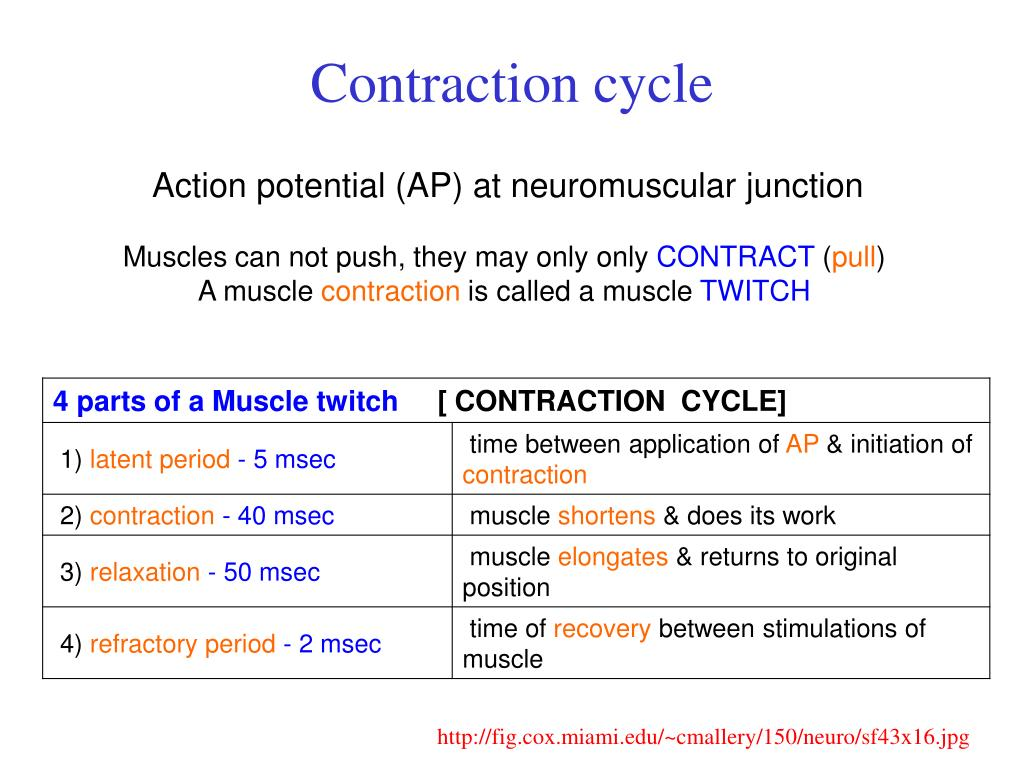 Contraction cycle