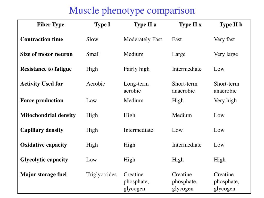 Muscle phenotype comparison