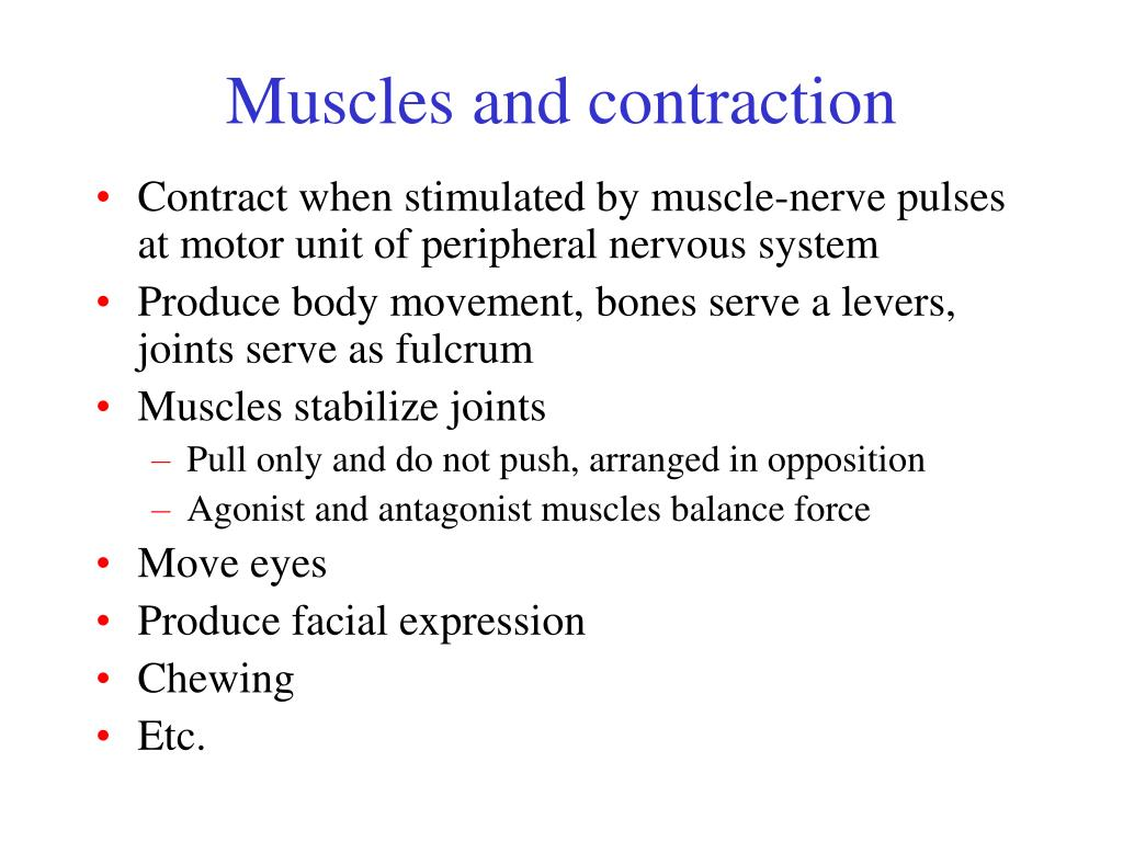 Muscles and contraction