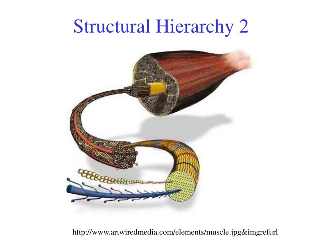 Structural Hierarchy 2