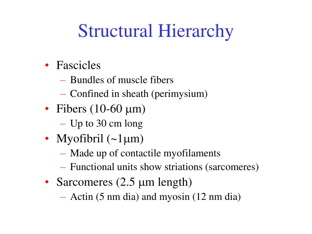 Structural Hierarchy