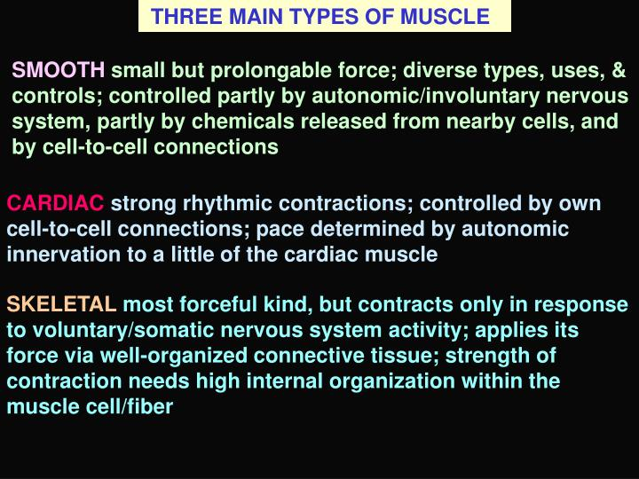 THREE MAIN TYPES OF MUSCLE