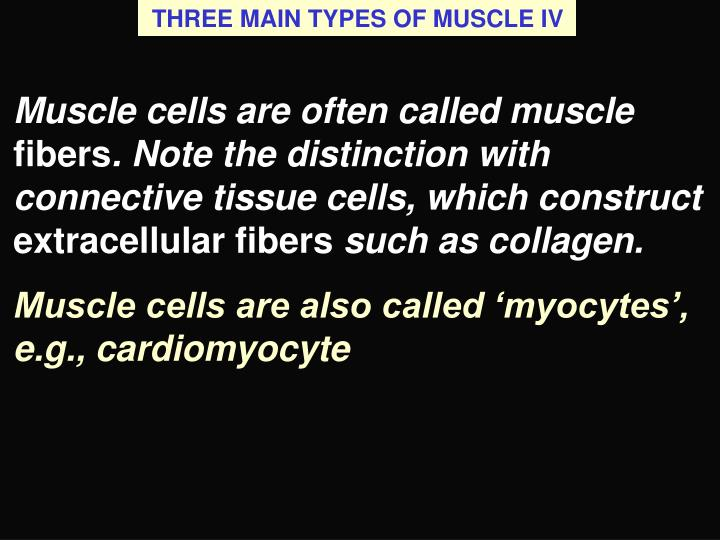 THREE MAIN TYPES OF MUSCLE IV