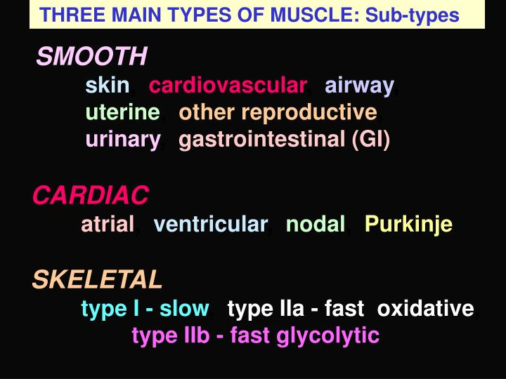 THREE MAIN TYPES OF MUSCLE: Sub-types