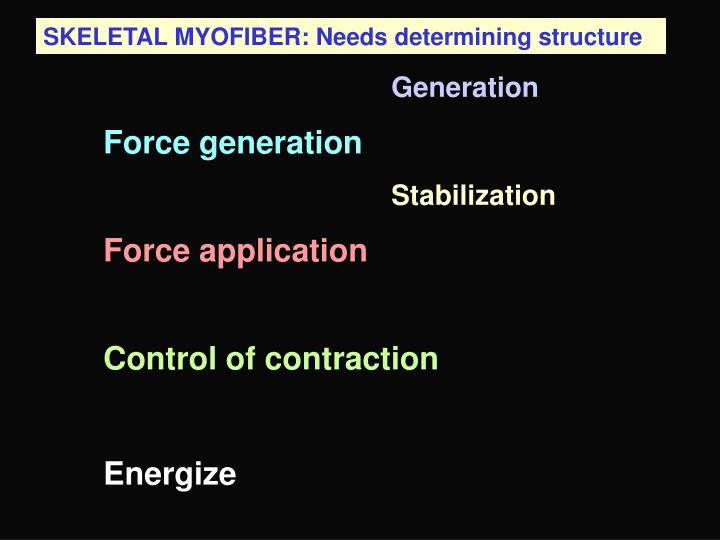 SKELETAL MYOFIBER: Needs determining structure