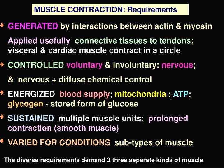 MUSCLE CONTRACTION: Requirements