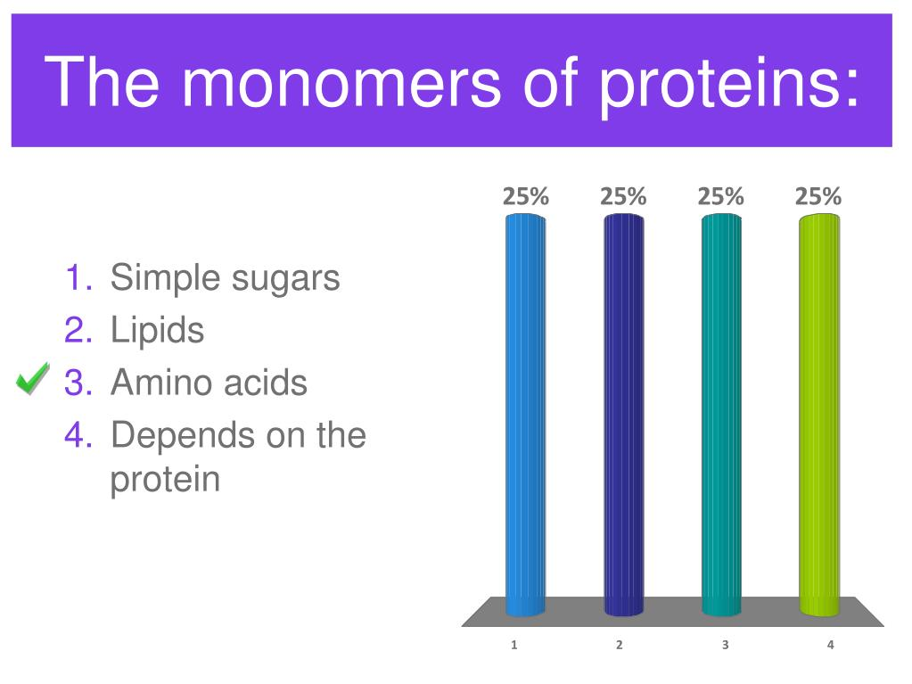The monomers of proteins: