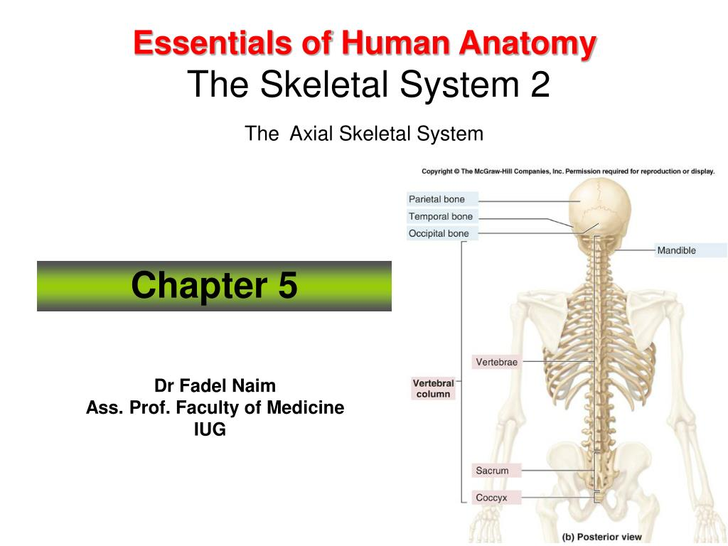 Human anatomy axial skeleton
