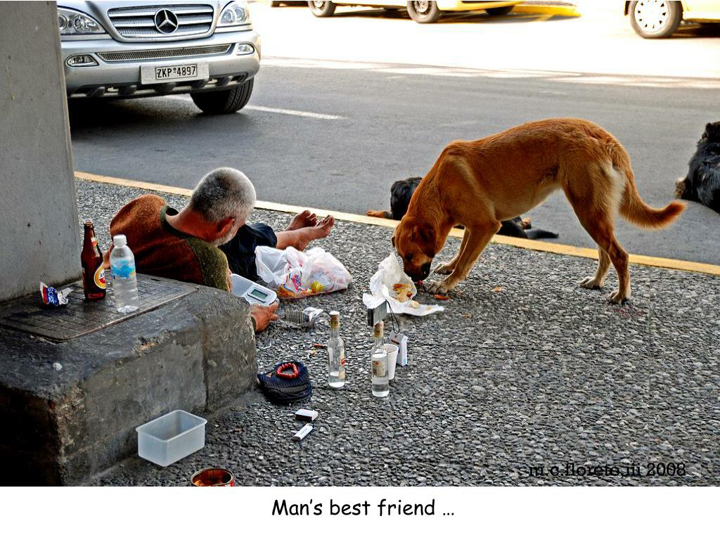 Man's best friend …