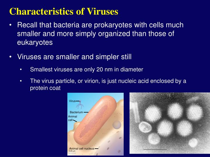Characteristics of viruses l.jpg