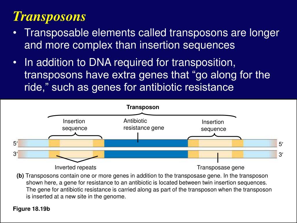 Transposon