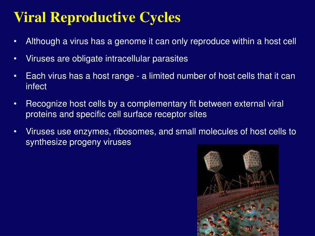 Viral Reproductive Cycles