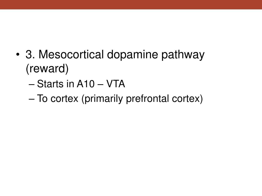 3. Mesocortical dopamine pathway (reward)