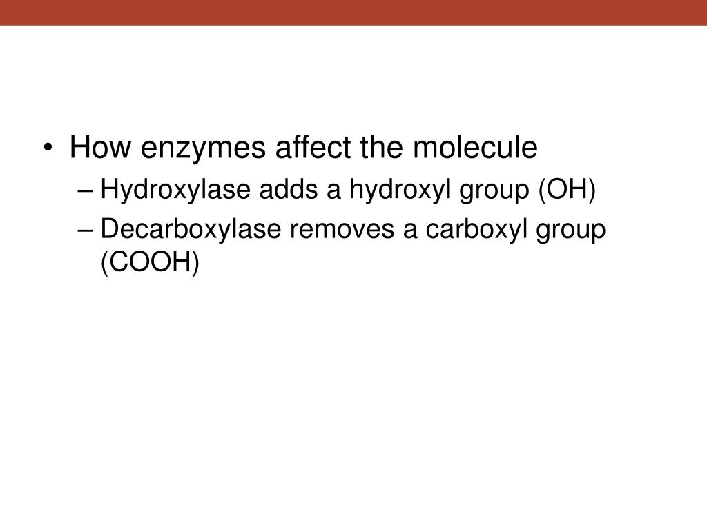 How enzymes affect the molecule