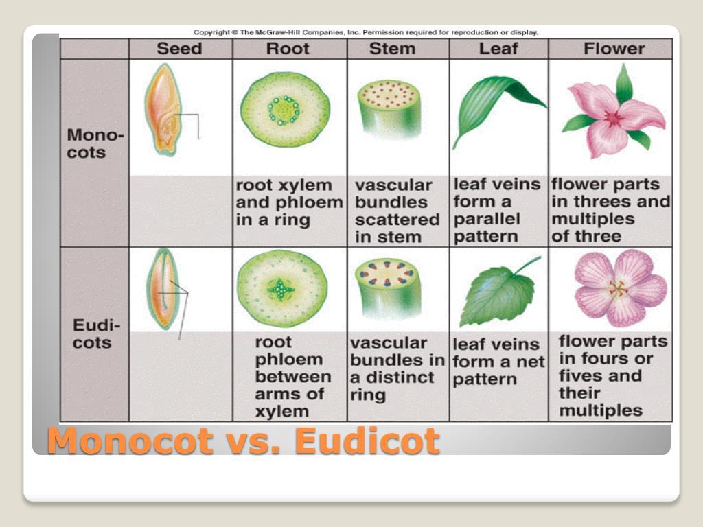Monocot vs.
