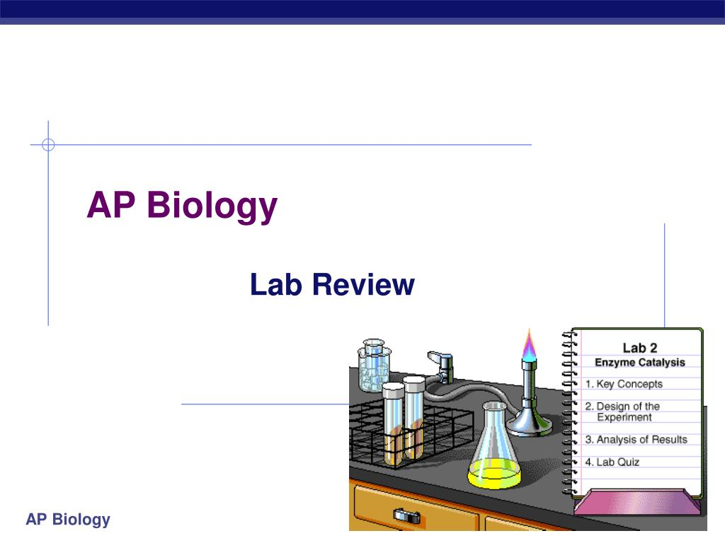 ap powerpoint presentation When in association with gclc it regulates activity by reducing the km for  glutamate and elevating the  ap-1 serves as an important enhancer for the rat  gs.