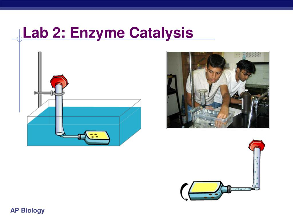 an experiment involving the use of enzyme catalase Science fair project that tests the effects of temperature change on the reactivity of the catalase enzyme.