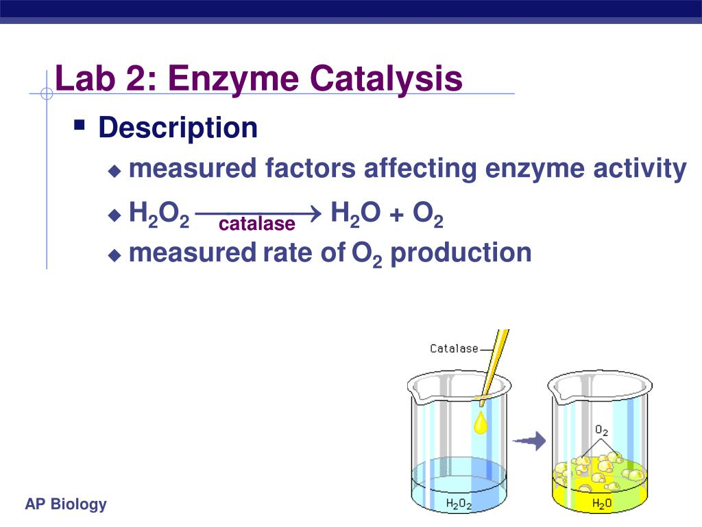 ap lab 2 enzyme catalysis Read and download ap lab 2 enzyme catalysis answers free ebooks in pdf format - the dream of scipio iain pears keep the change a clueless tippers quest to become.