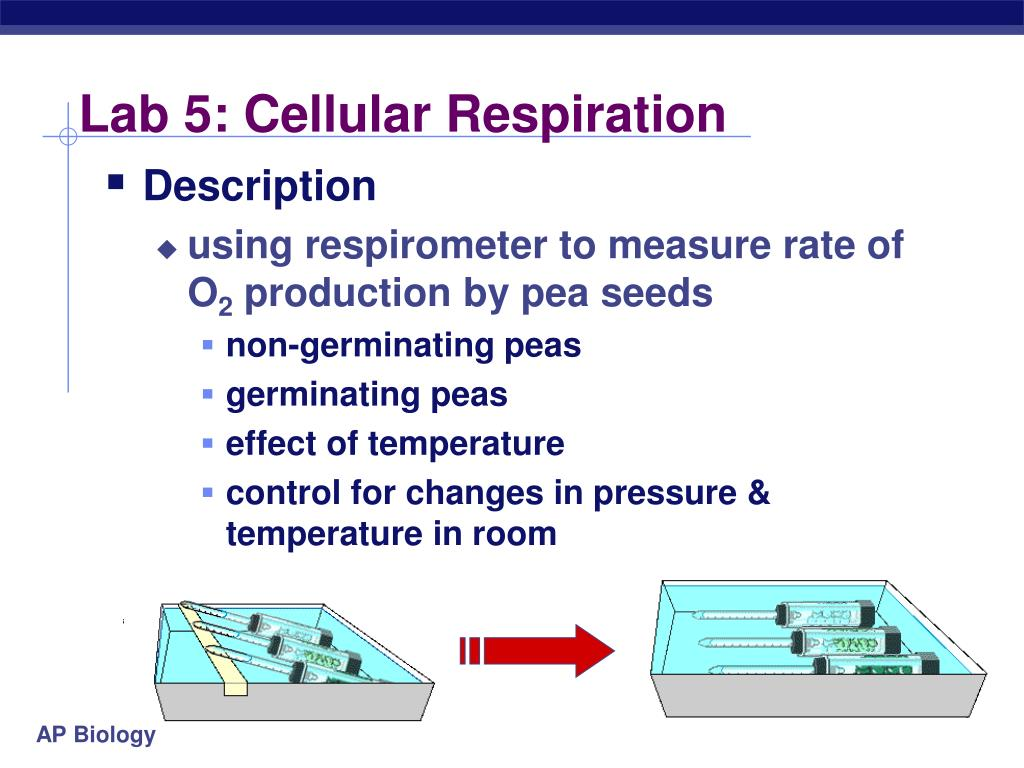 cellular respiration experimental design Several different cellular respiration pathways have evolved, based on the   extra credit: design an experiment to test for water or oxygen as discussed in.