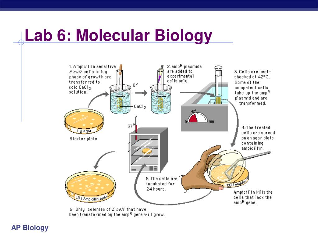 biological molecules lab report