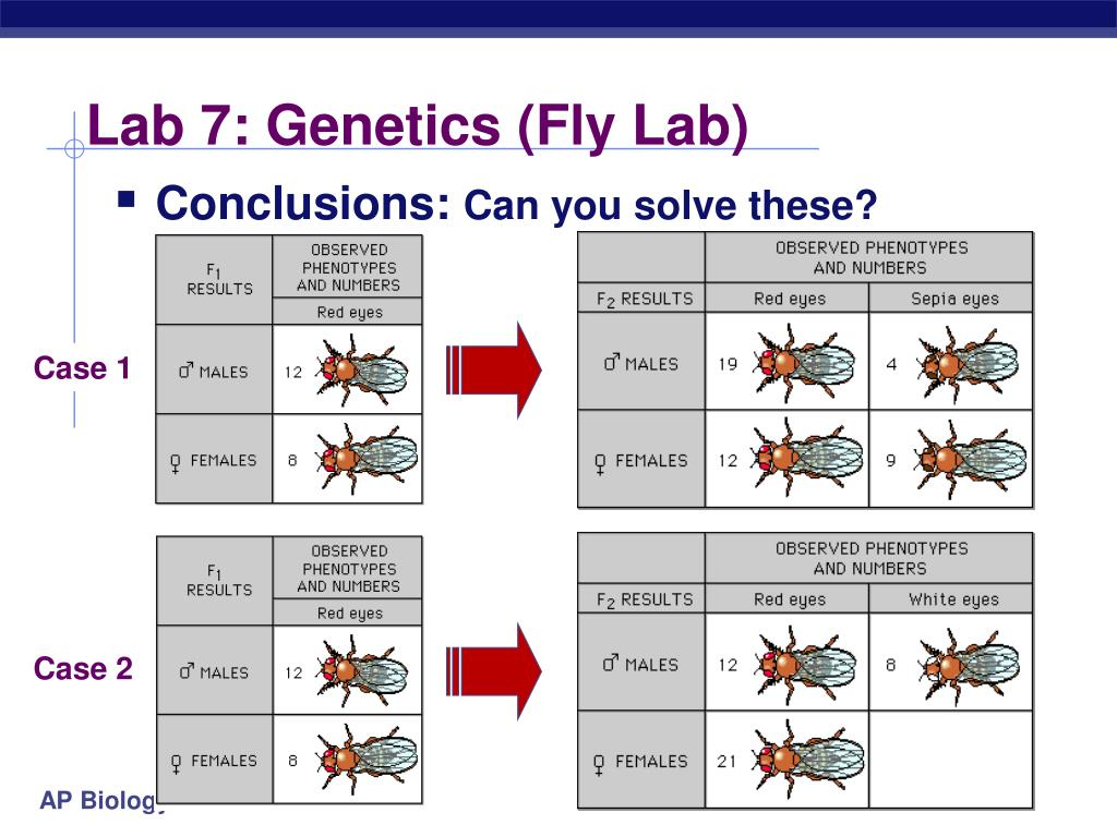 chi square ap biology essay Explore timing and format for the ap biology exam, and review sample questions, scoring guidelines, and sample student responses.