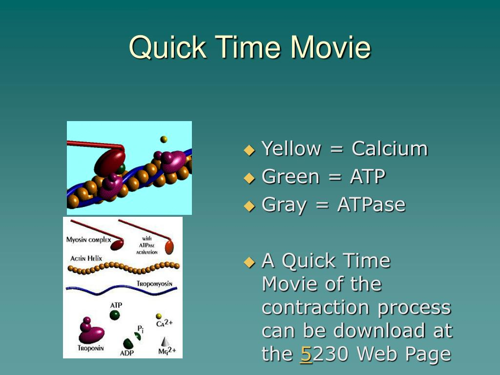 Quick Time Movie