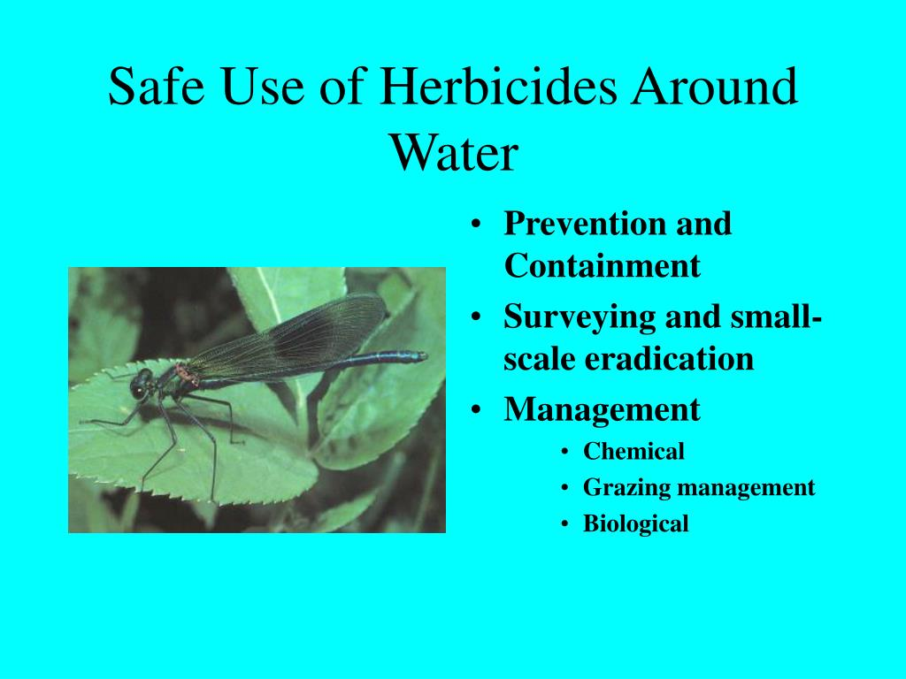 Safe Use of Herbicides Around Water