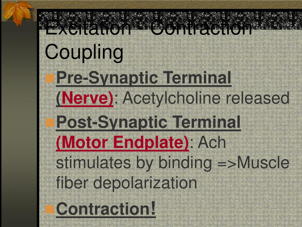 Excitation - Contraction Coupling