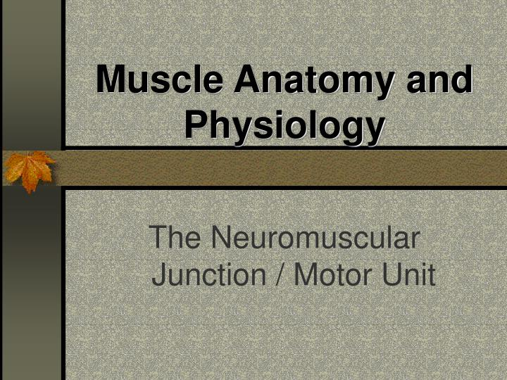 Muscle anatomy and physiology