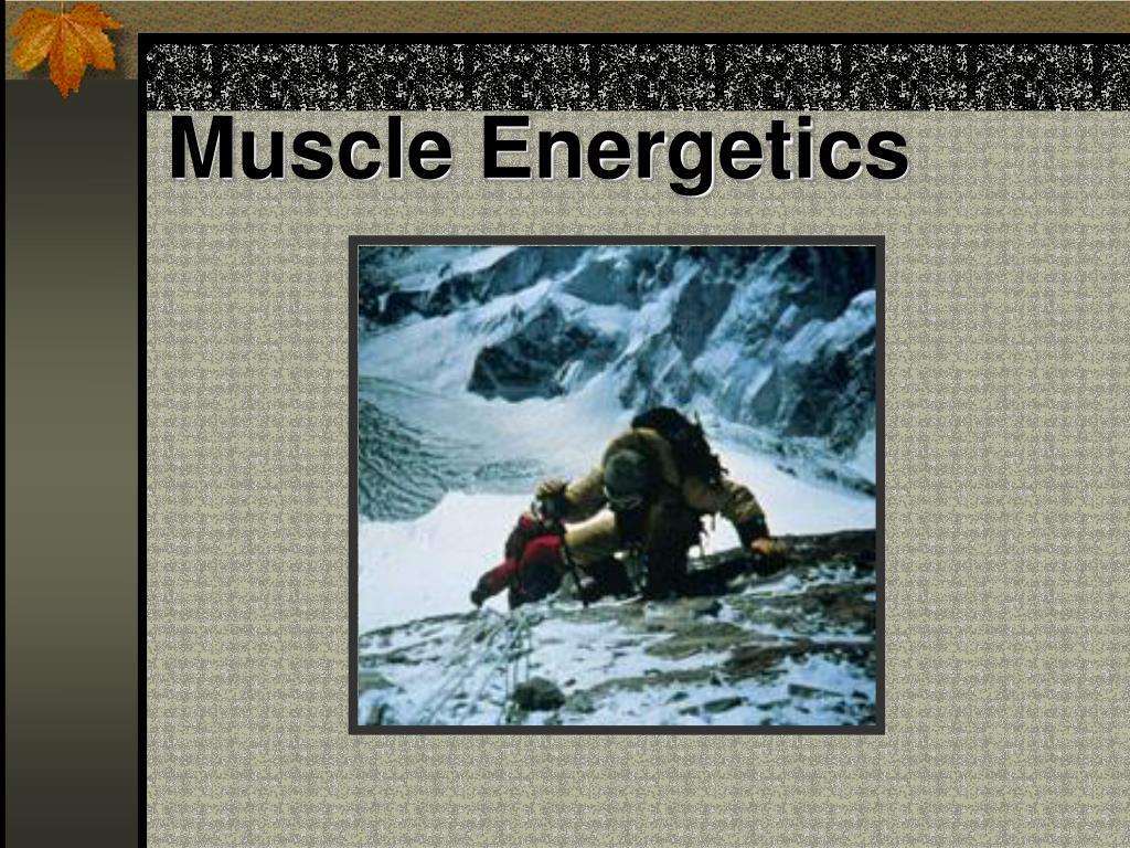 Muscle Energetics