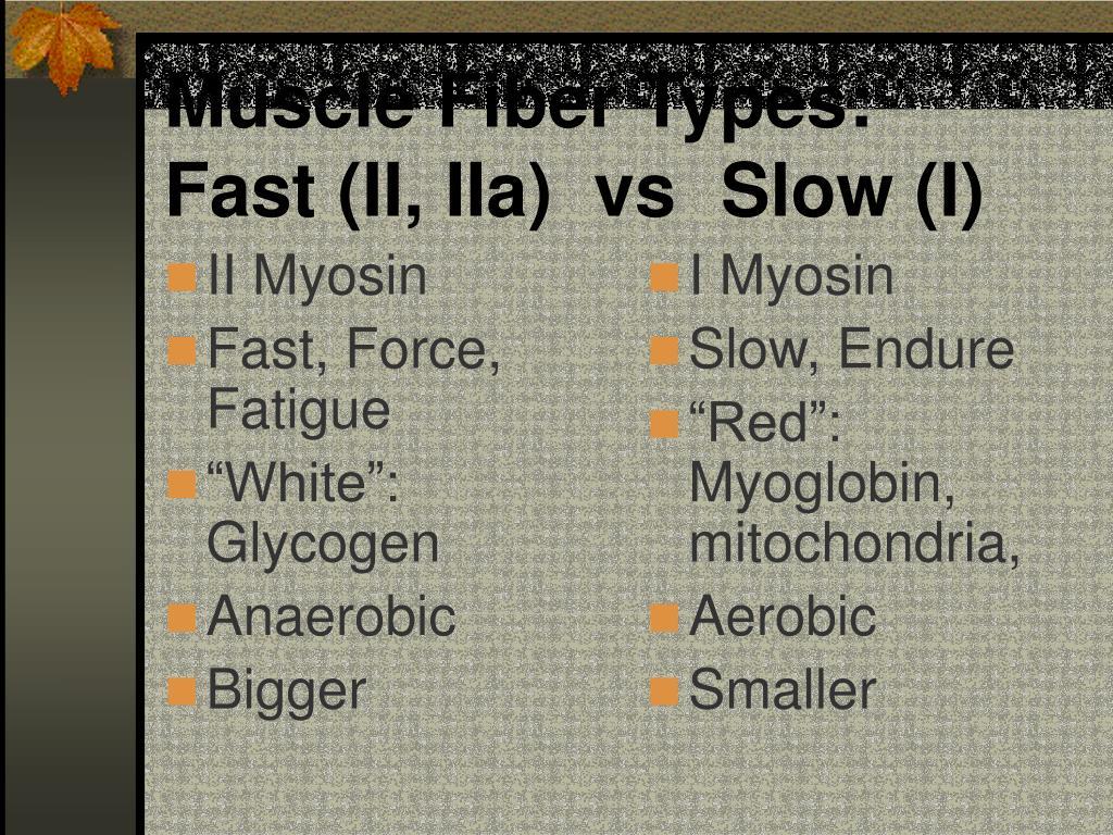 II Myosin