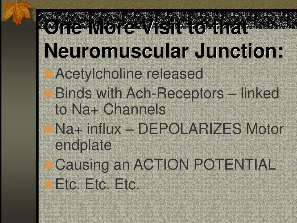 One More Visit to that Neuromuscular Junction: