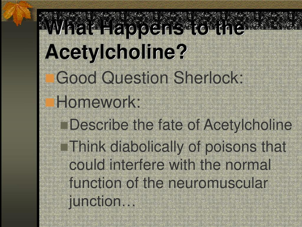 What Happens to the Acetylcholine?