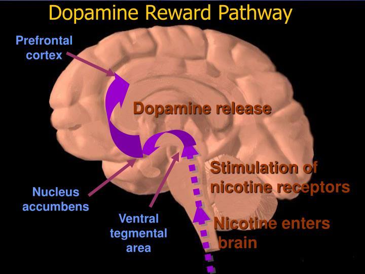 Dopamine Reward Pathway