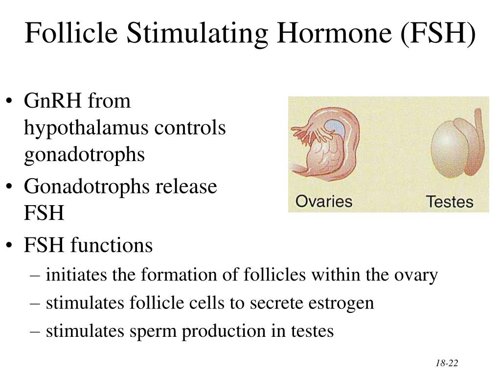 Follicle stimulating hormone sperm production