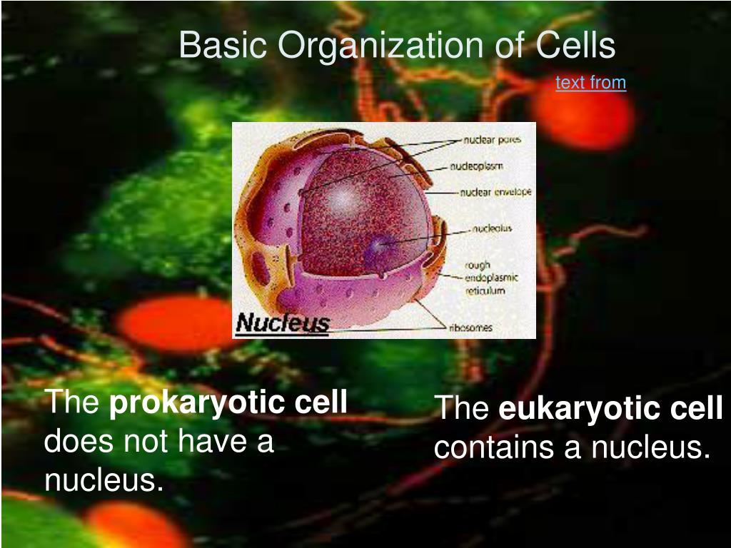 Basic Organization of Cells