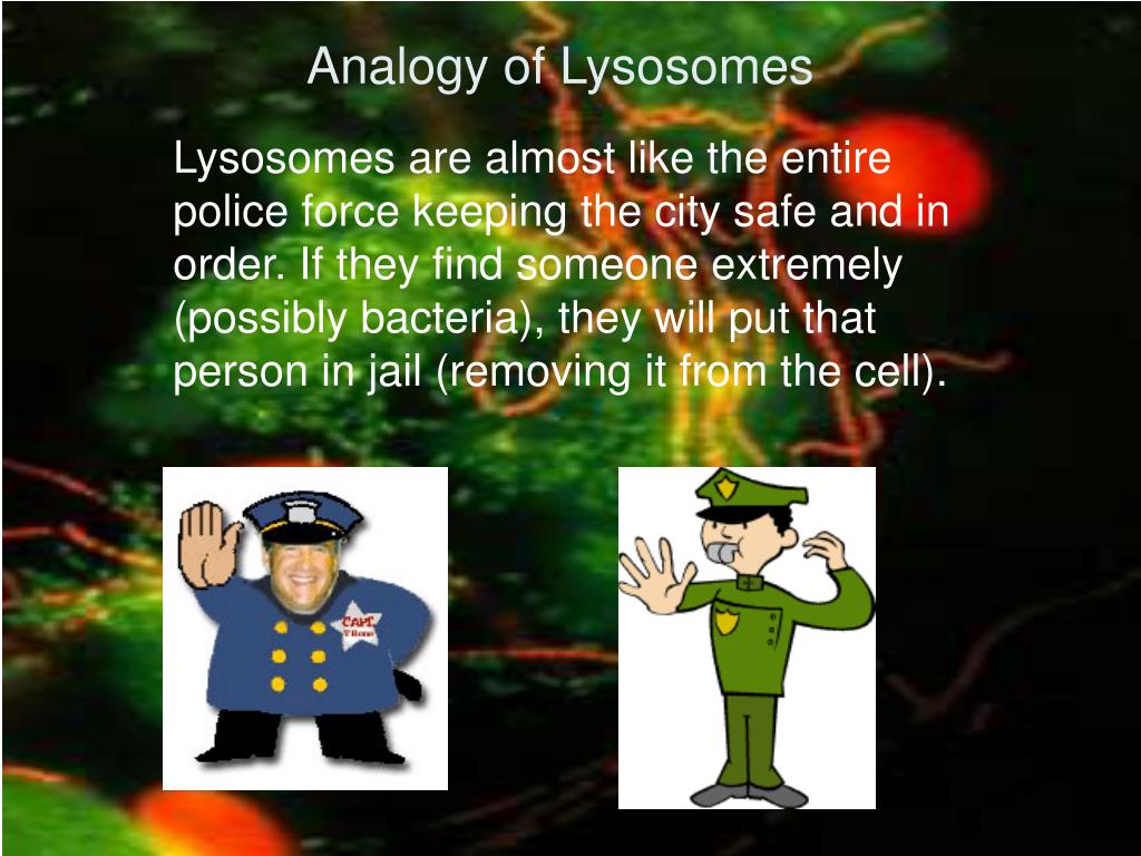 Analogy of Lysosomes